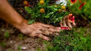 Safe Gardening